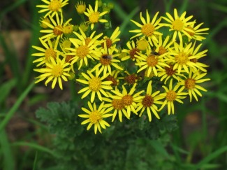 003_gele_bloemen