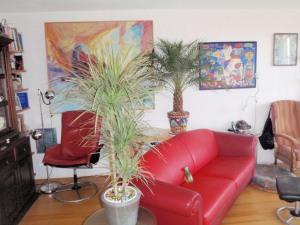 01 Eerste planten in ons nieuwe huis